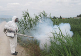 Spraying on the Rivers Segura and Mula underway to control mosquito larvae